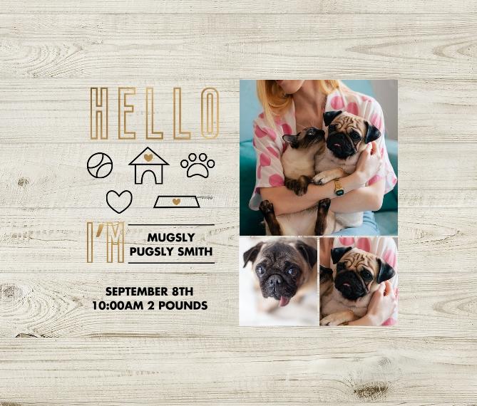 Pet Framed Canvas Print, Oak, 8x10, Home Décor -Lil Ball of Sunshine
