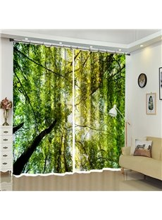 Green Branches Leaves Above Head Natural View Curtain Blackout