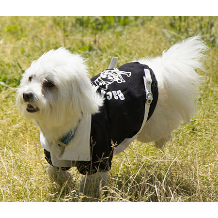 The Pet Life Varsity-Buckled Collared Pet Coat, One Size , Black