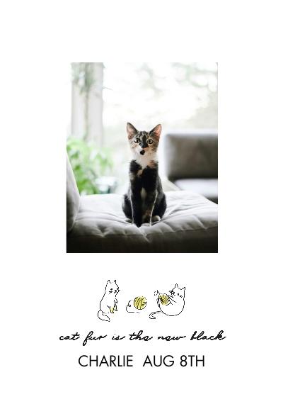 Pet Framed Canvas Print, Black, 20x30, Home Décor -Hipster Kitten