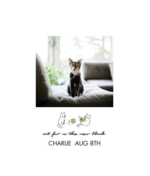 Pet Canvas Print, 8x10, Home Décor -Hipster Kitten
