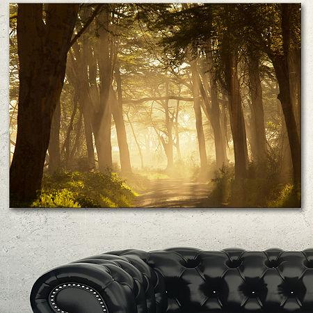 Designart Deep Jungle With Foggy Sunlight Oversized Landscape Canvas Art, One Size , Green