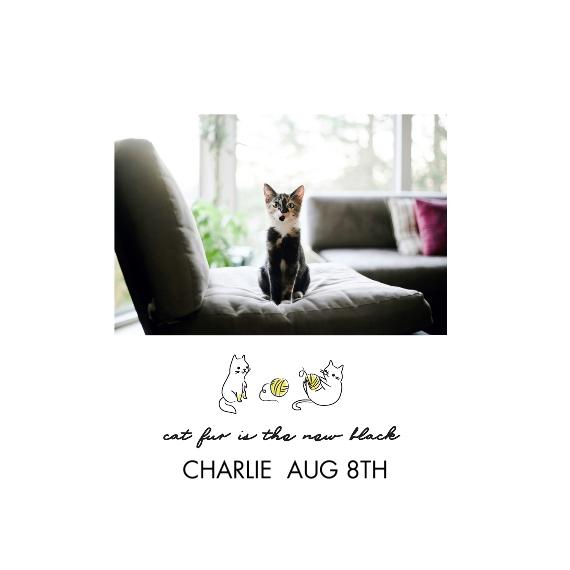 Pet Framed Canvas Print, Oak, 12x12, Home Décor -Hipster Kitten