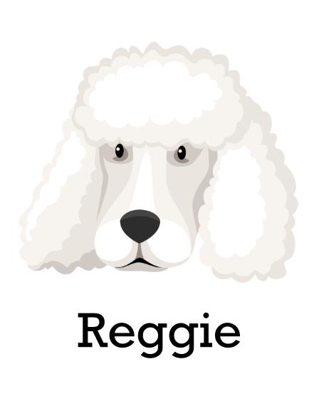 Pet 11x14 Poster, Home Décor -Poodle Shaved 4