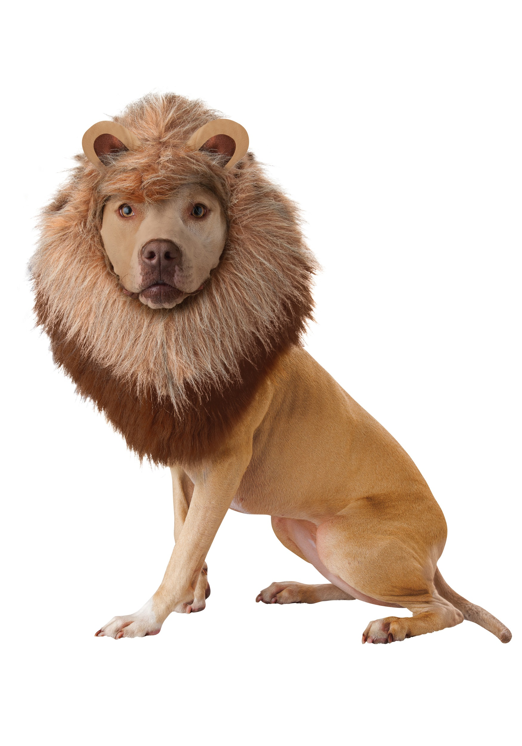 Lion Costume for Pets
