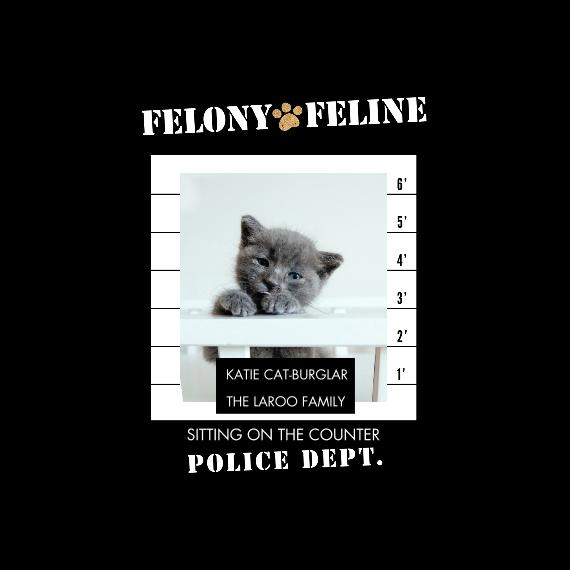 Pet Canvas Print, 12x12, Home Décor -Felony Feline