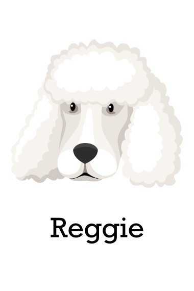 Pet 24x36 Adhesive Poster, Home Décor -Poodle Shaved 4