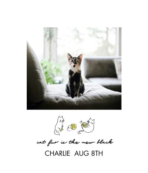 Pet Framed Canvas Print, Oak, 20x24, Home Décor -Hipster Kitten