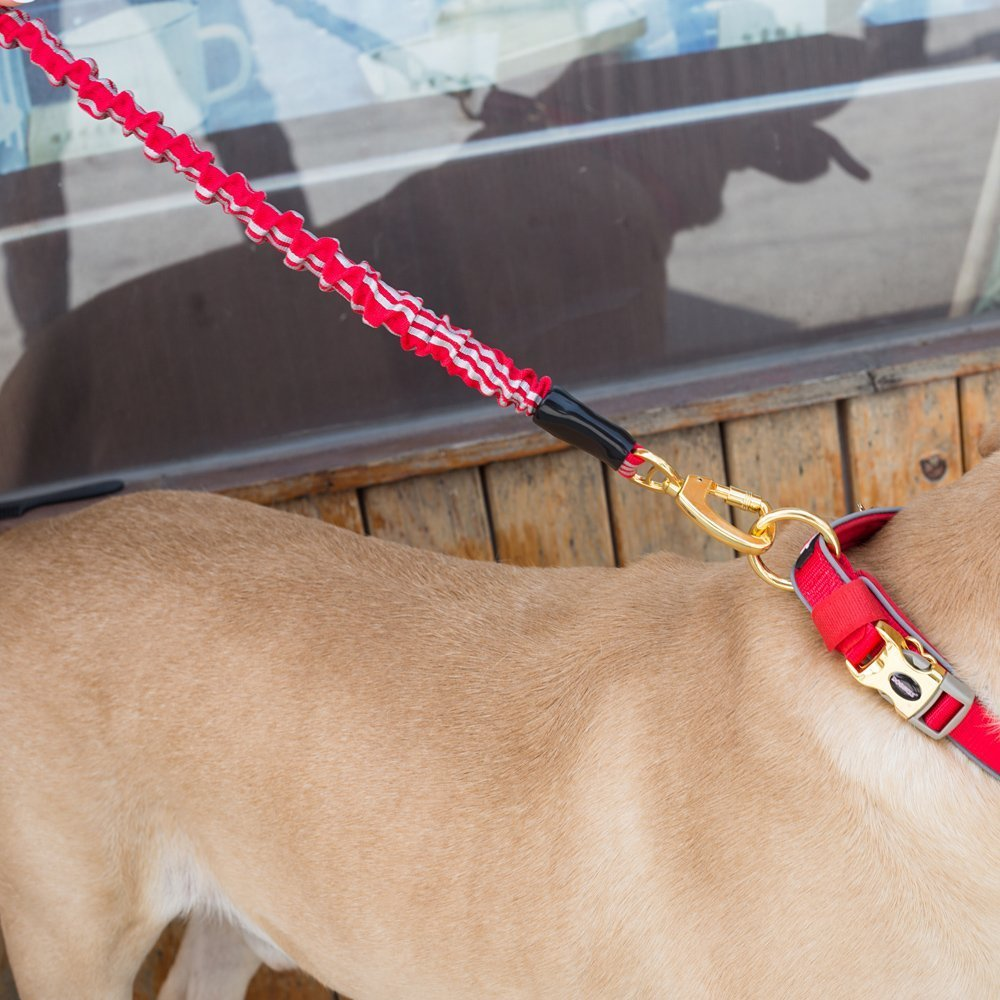 Dog Leash Traffic Control Handle Available Ultra Sturdy with Elastic Bungee Dog Traction Rope