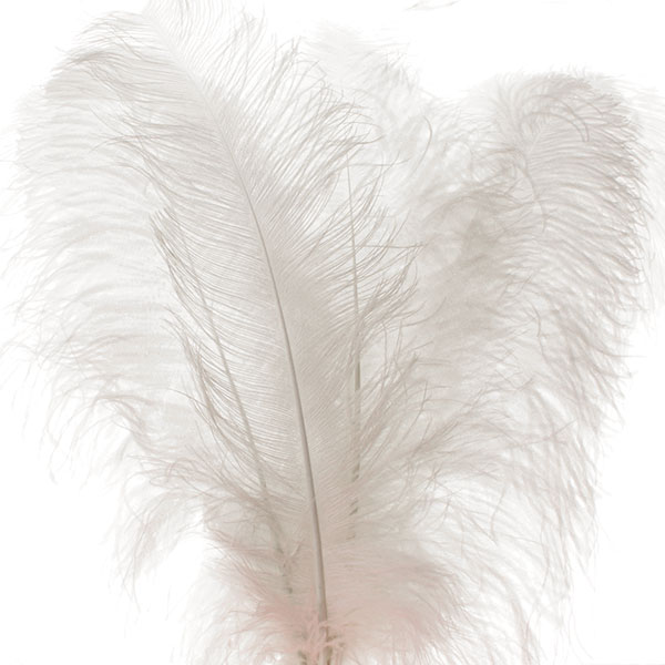 White Ostrich Wing Feathers 25